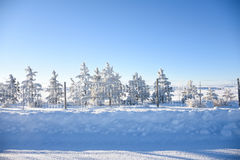 Pine Trees Along Fenceline In Snow. Blue And White Winter Landscape Royalty Free Stock Photography