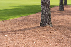 Pine Trees along Golf Course Stock Image