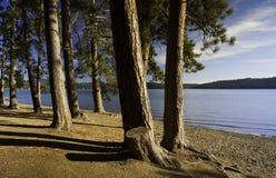 Pine trees along the shore. Royalty Free Stock Photos