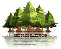 Free Pine Trees And Firs Background Stock Images - 59554984