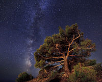 Pine trees on the background of  night sky. Pine trees on the background of an amazing night sky Stock Photography