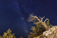 Pine trees on the background of  night sky. Pine trees on the background of an amazing night sky Stock Photos