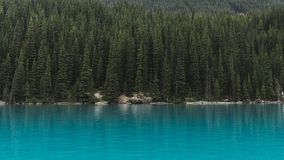Pine trees on banks of blue lake Stock Image