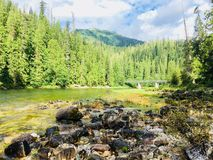 Banksof Clearwater River, Idaho. Pine trees on banks of Clearwater River, Idaho on sunny day Stock Photos