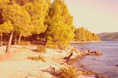 Pine trees on a beach Royalty Free Stock Photo