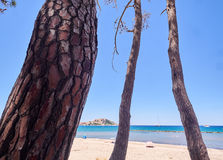 Pine trees at a beach in Corsica. Pine trees at a beach near Calvi in Corsica Royalty Free Stock Images