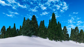 Pine trees. Beautiful pine trees on a background of snow and blue sky Royalty Free Stock Photo