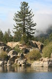 Pine Trees and boulders on Big Bear Lake Royalty Free Stock Images