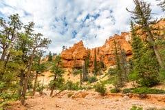 Pine trees at Bryce Canyon National Park. Utah Stock Photos