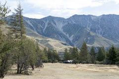 Pine trees at campsite in Glentanner Park Centre, Aoraki / Mount Cook National Park, Canterbury, New Zealand.  royalty free stock images