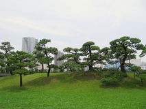 Pine trees in the central park of Tokyo Stock Image