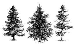 Pine trees / Christmas trees Stock Photos