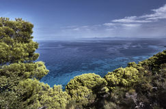 Pine trees on a cliff above the sea Royalty Free Stock Photography