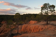 Pine trees on the cliffs during dusk Royalty Free Stock Images