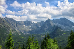 Pine trees closeup and stunning rocky mountain range. Behind it on sunny summer day stock photos
