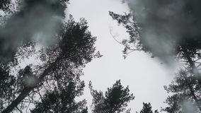 Pine trees on a cloudy sky background. Shot from under the ice stock footage