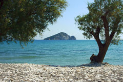 Pine trees on coast, Zakynthos island Stock Photo