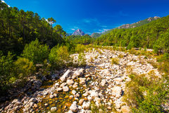 Pine trees in Col de Bavella mountains, Corsica island, France, Stock Images
