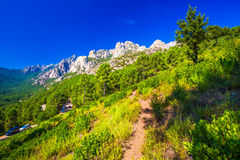 Pine trees in Col de Bavella mountains near Zonza town, Corsica. Island, France, Europe Stock Images