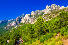 Pine trees in Col de Bavella mountains near Zonza town, Corsica. Island, France, Europe Royalty Free Stock Photo