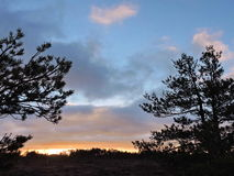 Pine trees in colorful sunrise sky Royalty Free Stock Photos