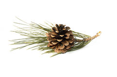 Pine Trees Cone Pictures Stock Photo