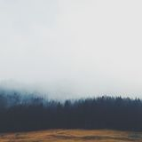 Pine Trees Covered With Fogs Stock Photos