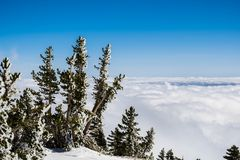 Pine trees covered in frost high on the mountain; sea of white clouds covering the valley in the background, Mount San Antonio (Mt. Baldy), Los Angeles county royalty free stock photo