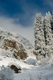 Pine trees covered with snow Royalty Free Stock Image