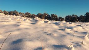Pine trees covered with snow on frosty day. Fantastic winter landscape. Sun in the wood between the trees strains in stock video