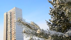 Pine trees covered with snow and high-rise apartment building. Pine trees covered with snow and a high-rise apartment building stock video footage
