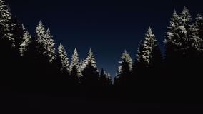 Pine Trees Covered by Snow during Night Time Royalty Free Stock Images