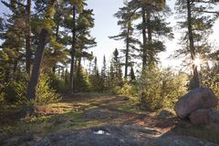 Pine trees at dawn with rocks and path in northern Minnesota. Pine trees with rocks and path on a clear morning in northern Minnesota stock photos