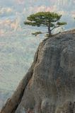 Pine trees at Demirji rocks, Crimea Stock Photo