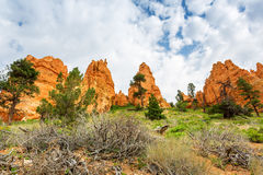 Pine trees and dry flora at Bryce Canyon Park. Pine trees and dry flora at Bryce Canyon National Park, Utah Royalty Free Stock Photos