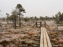 Pine Trees in Field of Kemeri moor in Latvia With a Footbridge B. Etween them on a Cold Winter Morning with some Frost on them royalty free stock photo