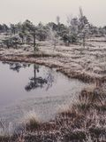 Pine Trees in Field of Kemeri moor in Latvia with a Pond in a Fo. Reground on a Cold Winter Morning with some Frost on them - vintage look edit royalty free stock image