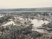 Pine Trees in Field of Kemeri moor in Latvia with a Pond inbetwe. En of them on a Cold Winter Morning with some Frost on them - vintage look edit Royalty Free Stock Images
