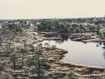 Pine Trees in Field of Kemeri moor in Latvia with a Pond inbetwe. En of them on a Cold Winter Morning with some Frost on them - vintage look edit stock images