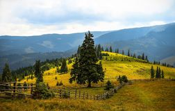 Pine Trees Field Near Mountains during Daytime Royalty Free Stock Photo