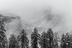 Pine trees in fog on snow mountain Stock Photo