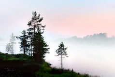 Pine trees in foggy landscape Royalty Free Stock Photography