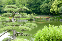 Pine trees, footpath, bridge with reflection in private garden Stock Photo