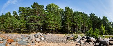 Pine trees in the forest. Classical Baltic beach landscape. Wild nature stock photos