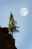 Pine Trees Forest with Full Moon. Landscape Stock Images