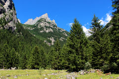 Pine trees forest in the mountains Stock Photo