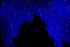 Pine Trees Forest Night Time Star Trails Light Stock Images