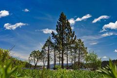 Pine trees form a triangle by Lake Tahoe Royalty Free Stock Photo