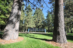 Pine trees frame a blue volleyball net Royalty Free Stock Photography