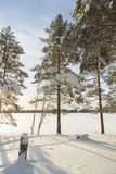 Pine Trees in front of Frozen Lake Royalty Free Stock Photos
